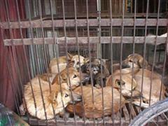 Kinship Circle - 2007-10-29 - 03 - Korea - Stop Eating Cats And Dogs