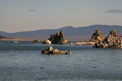Mono Lake Tufa (dcnelson1898) Tags: california lake water desert monolake tufa rockformation monocounty alkalilake