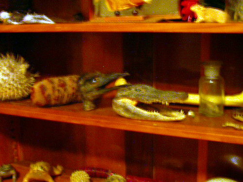 Emu head, second shelf