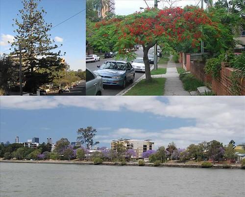 Passado a época do Jacarandá, agora é a vez dos Flamboyants em Brisbane, Austrália