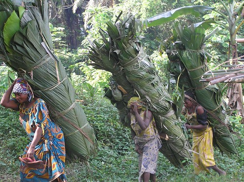 The ladies of Obenge return from the forest with the leaves for the roof of the new camp for TL2