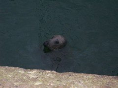 Howth Seal (themoonbase) Tags: howth seal