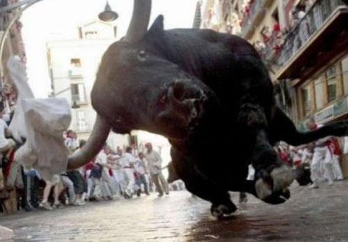 Bull Coming