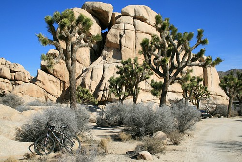 rock trees bike
