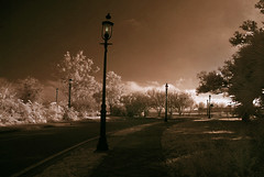 Bay Front (Terrell Solana) Tags: trees ir bay florida pensacola lamplights betterthangood goldstaraward