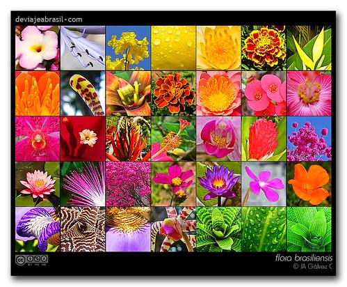 flora brasiliensis