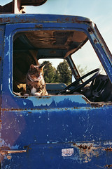 Bruce's found film, Karoo Roadtrip, 2001 (mallix) Tags: road camera 2001 old trip bridge friends red wild summer vacation guy film forest river southafrica fun found outdoors bush outdoor hiking acid bruce memories roadtrip andrew memory worldcup stef tripping 2010 knysna karoo owlhouse harkerville nieubethesda soccerworldcup worldcup2010 fifa2010