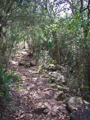 Trail_des_balcons_d_azur_2008 (353)