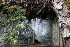 shed windowpane (axiepics) Tags: old windows friends canada abandoned window glass leaves rural moss bc britishcolumbia country vancouverisland bark deserted windowpane ruraldecay countryroads ©copyrightalexskellyallrightsreserved
