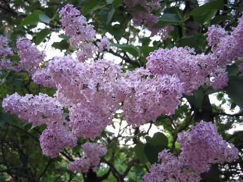 花朵小巧又迷人