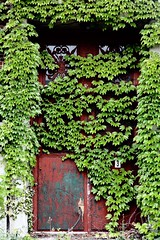 still not an exit (splityarn) Tags: door school red green overgrown leaves ma doors ivy exit medford facebook lincolnhigh