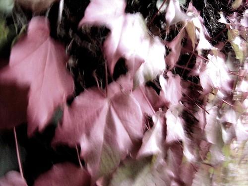 DSC08029© fatima ribeiro2007
