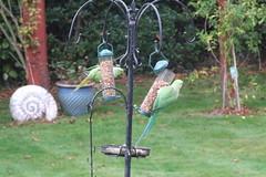 Parrots in the Garden #2