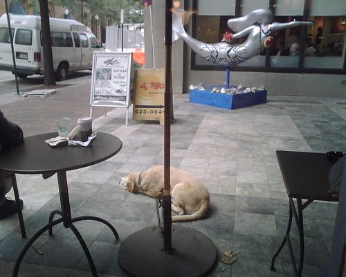 Taking a rest outside Starbucks in Downtown Norfolk
