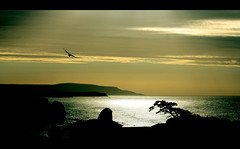 Isle of Wight Landscape (Freebird). A seagull silhouette sunrise at Freshwater Bay (s0ulsurfing) Tags: ocean uk morning light shadow sea england sky cliff cloud sun sunlight seagulls seascape bird art beach water birds silhouette rock clouds sunrise canon wow island dawn freedom bay