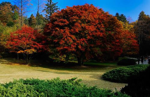 廬山 植物園
