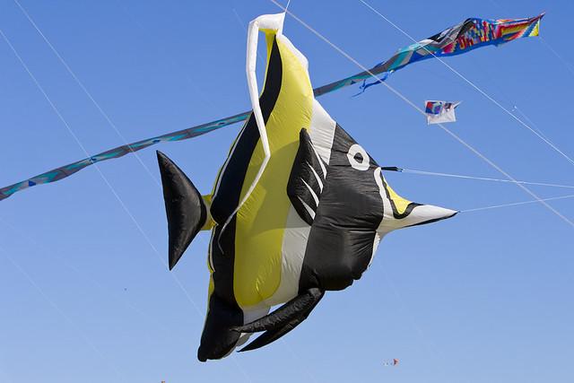 cerf-volant-poisson cocher