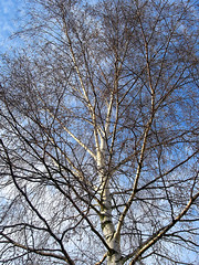wintertree (Yersinia) Tags: uk greatbritain winter england london nature public training geotagged europe unitedkingdom britain lewisham eu run gb yuck safe triathlon southlondon roderick catford londonset ccnc photographical yersinia forstermemorialpark londonpool casioexz110 guessnot forsterpark itsonlynatural catfordpool southlondonpool catfordladywellandlewisham southlondonset lewishampool londonboroughcollection