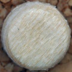 wood plug (Leo Reynolds) Tags: canon eos iso100 squaredcircle 60mm f8 0ev 0125sec 40d hpexif sqrandom xratio11x sqset026 xleol30x