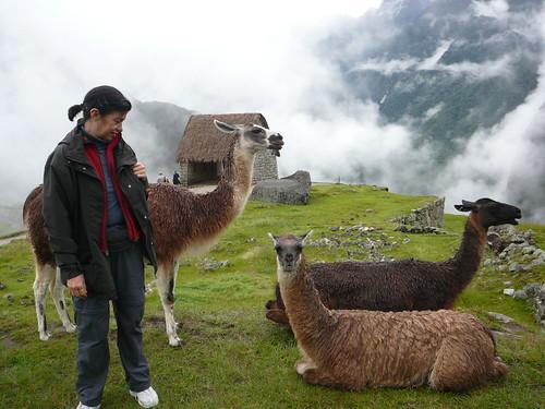 Peru , Machu Pichu