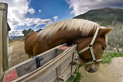 Euga (octarina8) Tags: sky horse mountain clouds hair caballo photography 1 fisheye explore monica cielo nubes montaa hdr pelo cavall pupi loh yegua peleng mni prats explored euga empyreananimals awardflickrbest octarina8 monicaprats monicapratscom