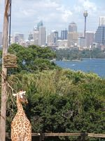 TARONGA ZOO (LUCIANO CBA) Tags: world park street travel bridge house tower beach argentina bondi opera rocks cross harbour oz centre manly sydney cities australia places quay ciudades hyde viajes kings oxford lugares nsw cordoba beaches darling playas luciano the oceania