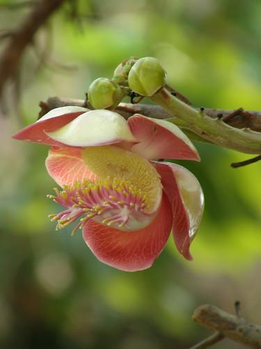 Flower at Wat Pho