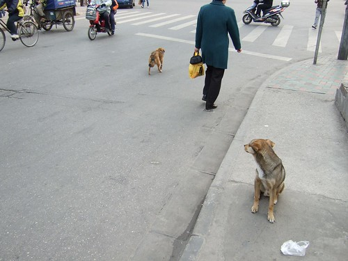 Dogs in near Rainbow City