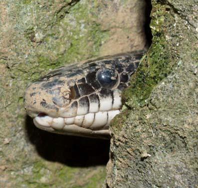 SnakeInWall2