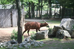 Zoo 022 (chippa) Tags: elephant zoo gorilla snake lorikeet e louisville serpent babyelephant louisvillezoo