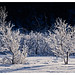 "Frozen trees- • <a style=""font-size:0.8em;"" href=""http://www.flickr.com/photos/76591138@N05/32798692566/"" target=""_blank"">View on Flickr</a>"
