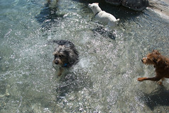(Pete Finlay) Tags: dog pool ace henry louie lorri aguadulce detachedmind petefinlay