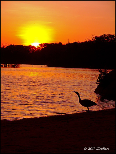 Goose Greeting Sun