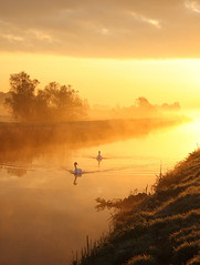 Swans at Sunrise (torimages) Tags: uk autumn trees england orange mist reflection tree nature misty sunrise reflections glow glastonbury atmosphere somerset autumncolours sd swans mysterious rhine allrightsreserved peacefull somersetlevels rhyne mywinners platinumheartaward butleighmoor roseawards donotusewithoutwrittenconsent copyrighttorimages