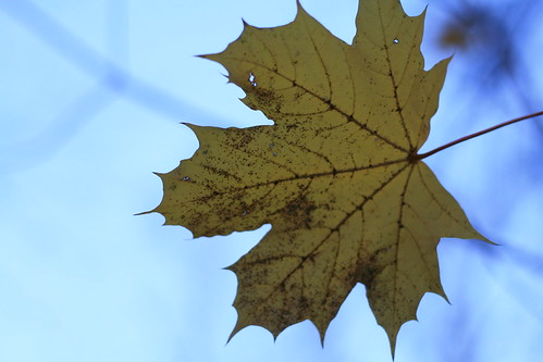 leaf sequence2