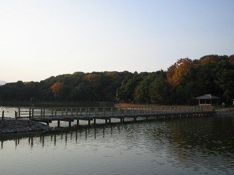 橿原神宮-深田池