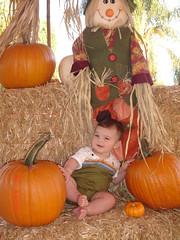 Pumpkin Brady 06 (lll4curry) Tags: halloween06
