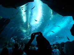 Under the Sea (Barefoot In Florida) Tags: fish georgiaaquarium