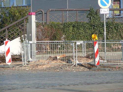 Baumfällarbeiten an der Bautzner Straße (14)