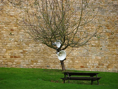 talking tree (David Darnes) Tags: pictures photo you daniel thank week eactock