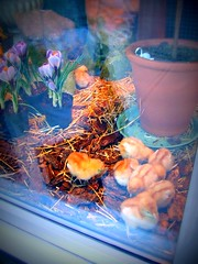 Chicken inside window display
