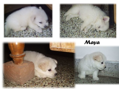 Maya 001