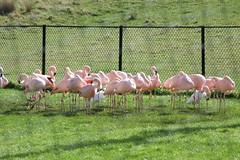 Longleat Safari Park #20
