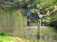 Fly Fishermen in Four Mile Run at Bluemont Park