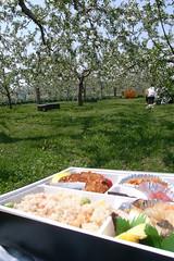 R0011478 (anchoco2008) Tags: apple hirosaki