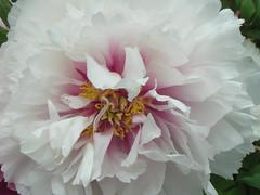 white (Dana(ful)) Tags: floraandfauna