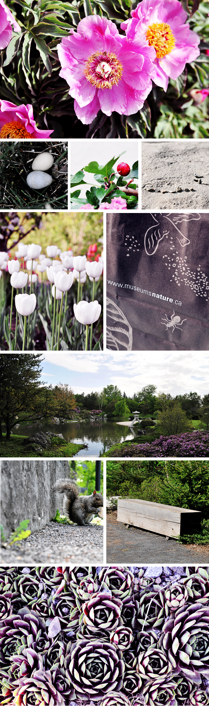 Montréal Botanical Garden
