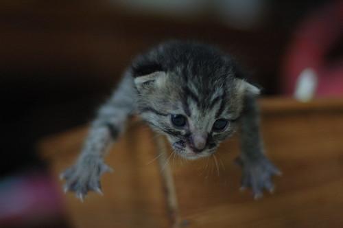 cat 50mm kitten d70s