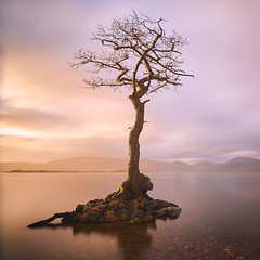 That Tree (Rendeification) Tags: nikon d750 irix 15mm loch lomond milarrochy bay tree long exposure clouds water calm mood colours pastel
