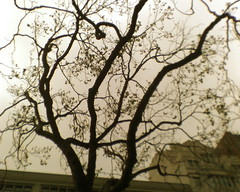 Market Street 6 PM, Spring & My Mood .... (janellen_7) Tags: cameraphone sanfrancisco street trees sky streets fog hope spring mood branches sidewalk marketstreet uncertainty dendrites